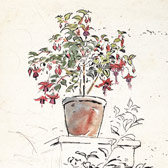 Beatrix Potter, 'Sketch of a potted fuschia'