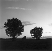 Robert Adams, 'Aurora