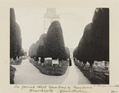 Sir Benjamin Stone, 'The famed clipt yew trees of Painswick Churchyard. Gloucestershire. 1902'. Museum no. E.2326-2000
