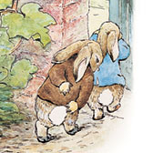 Beatrix Potter, 'Mr Bunny marches Peter and Benjamin out of garden'
