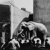 The Elephant and Rhino House, London Zoo by Hugh Casson