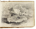 Dock leaves. Constable Sketchbook