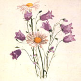 Beatrix Potter (1866-1943), Study of harebells and marguerites