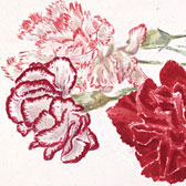 Beatrix Potter (1866-1943), Study of carnations