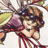 Cicely Mary Barker (1895–1973), Illustration of the Elderberry Fairy for Flower Fairies of the Autumn