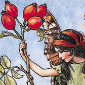 Cicely Mary Barker (1895–1973), Illustration of the Rose Hip Fairy for Flower Fairies of the Autumn