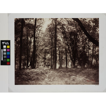 Photograph - Bas-Breau, Forest of Fontainebleau; In the Forst of Fontainebleau