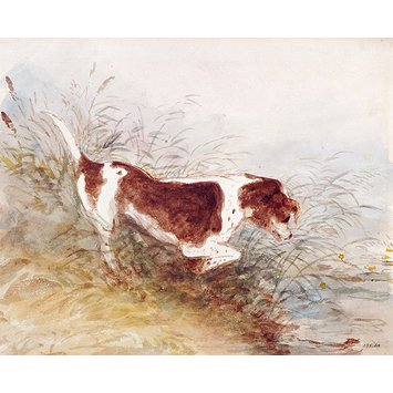 Watercolour - A dog watching a rat in the water at Dedham