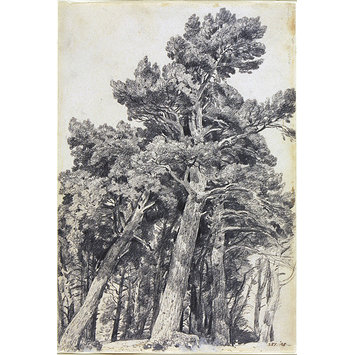 Drawing - Fir Trees at Hampstead