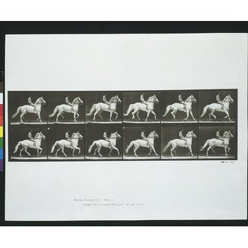 Photograph - Horse and rider