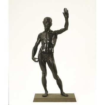 Statuette - Anatomical figure