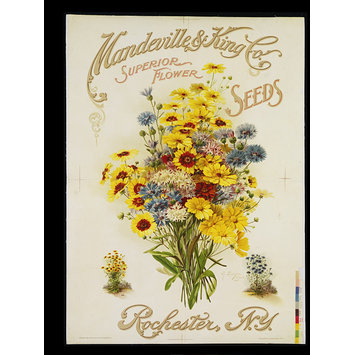 Poster - Mandeville & King Co., Superior Flower Seeds