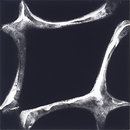 Chladni Figure 1 (Photogram)