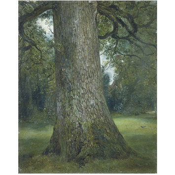 Oil painting - Study of the Trunk of an Elm Tree