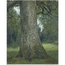 Study of the Trunk of an Elm Tree (Oil painting)