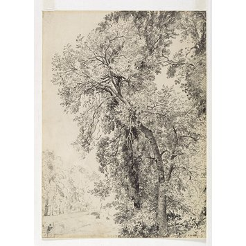 Drawing - Study of ash trees