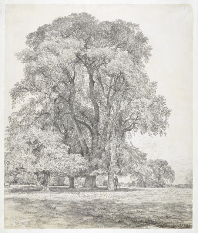 John Constable Drawings Elm Trees in Old Hall Park