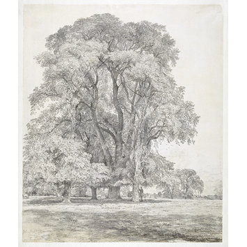 Drawing - Elm trees in Old Hall Park, East Bergholt