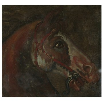 Study of a Horse's Head | Carlevarijs, Luca | V&A Search ...
