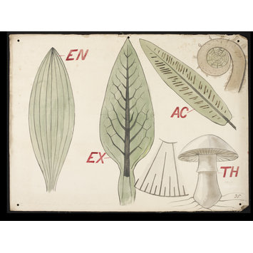 Drawing - Botanical diagram