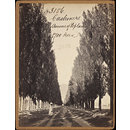Cashmere.  Avenue of Poplars (1,700 Trees) (Photograph)