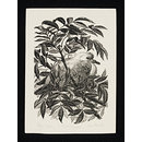 The Fledgling Dove (Print)
