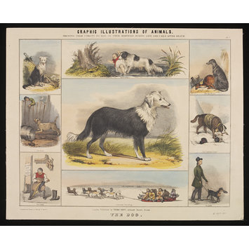 Print - Graphic Illustrations of Animals.; The Dog