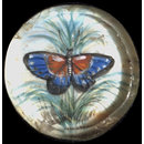 One of twenty-six ivory buttons painted with butterflies. (Button)