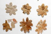 Artificial flowers, 300-400 AD. Museum no. LOAN:STEIN.628 (M.III.0013).