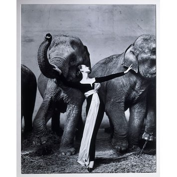 Photograph - Dovima with the Elephants - evening dress by Dior, Cirque d'Hiver, Paris, August 1955