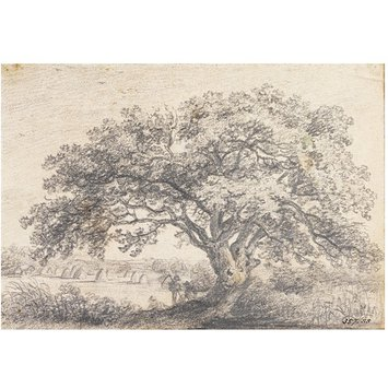 Drawing - An oak tree in a hayfield