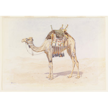 Watercolour - Female Riding Camel