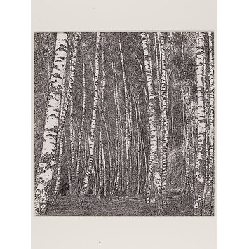 Photograph - Birches IV