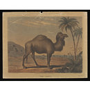 Varty's Series of Domestic & Wild Animals (Print)