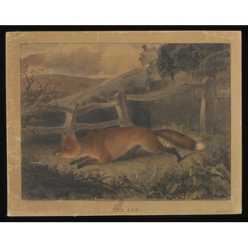 Print - Varty's Series of Domestic & Wild Animals