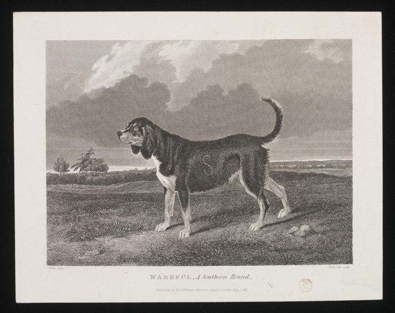 WAREFUL, A Southern Hound. | Willis | V&A Search the ...