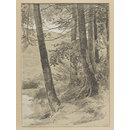 Study of tree stems at King George's Hill, Abinger (Drawing)