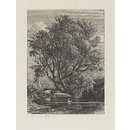 The Willow (Etching)