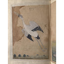 Depictions of a Spur-winged plover and Open-billed stork of Northern India, (Painting)