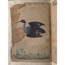 Depictions of a Domestic goose and Black ibis inocotis, of Northern India (Painting)