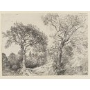 Trees in West End Fields, Hampstead (Drawing)