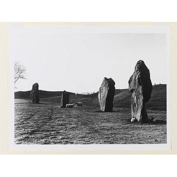 Photograph - Ridgeway: Avebury, sunrise with sheep