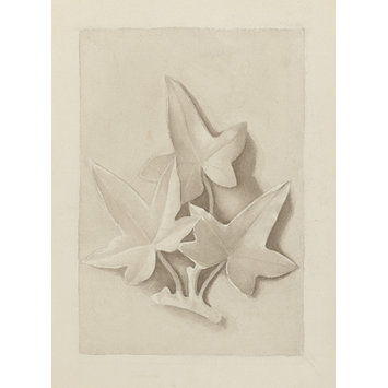 drawing - Drawing of a plaster cast featuring three ivy leaves