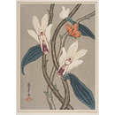 Orchids, butterfly and ladybird. (Print)