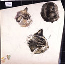 Studies of the head of a kitten (drawing)